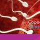 Fertilidad Murcia - Capacitación espermática