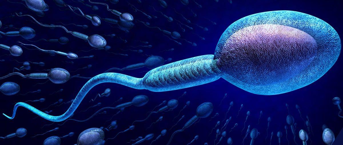 Fragmentación ADN