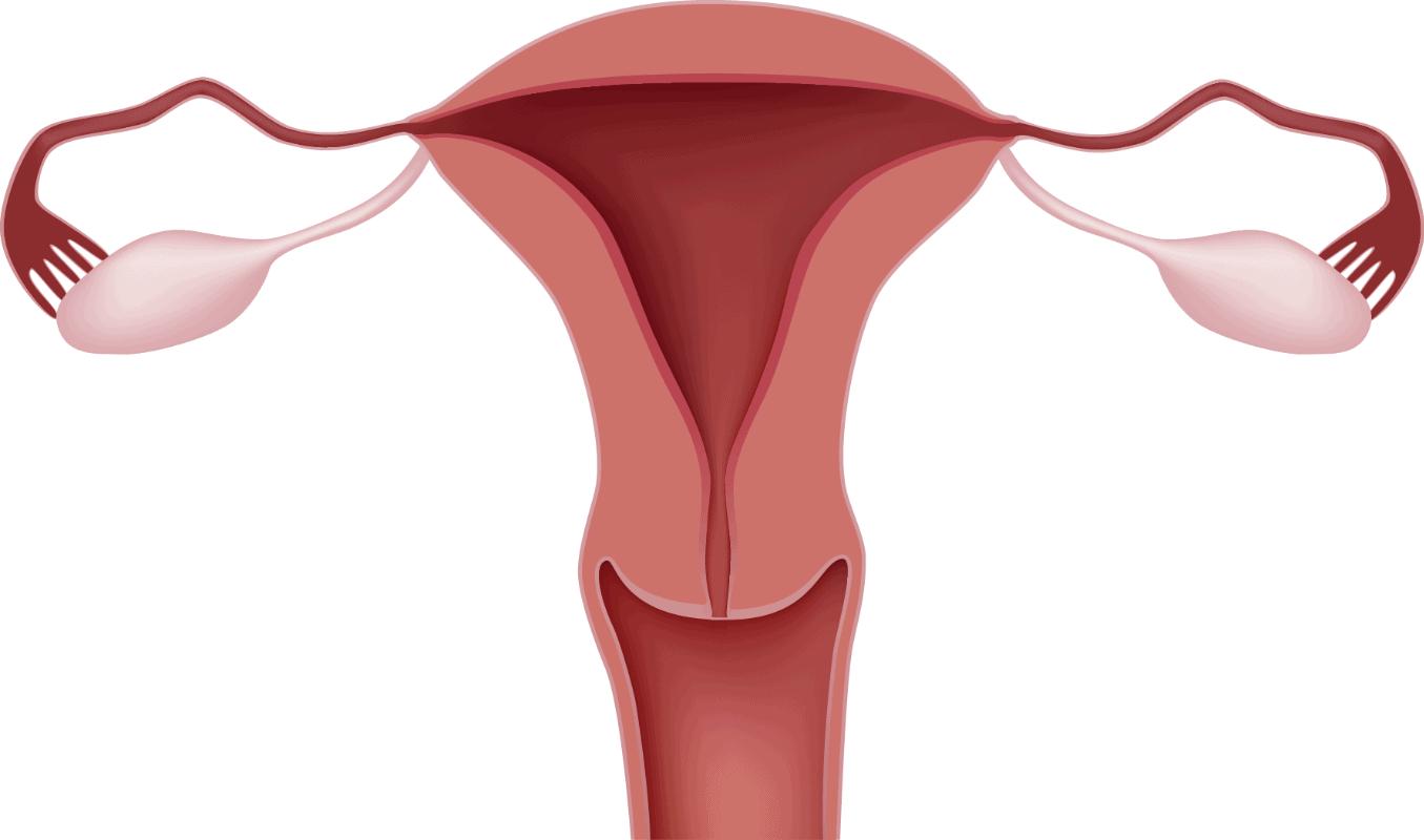 Factor uterino, su importancia en la esterilidad