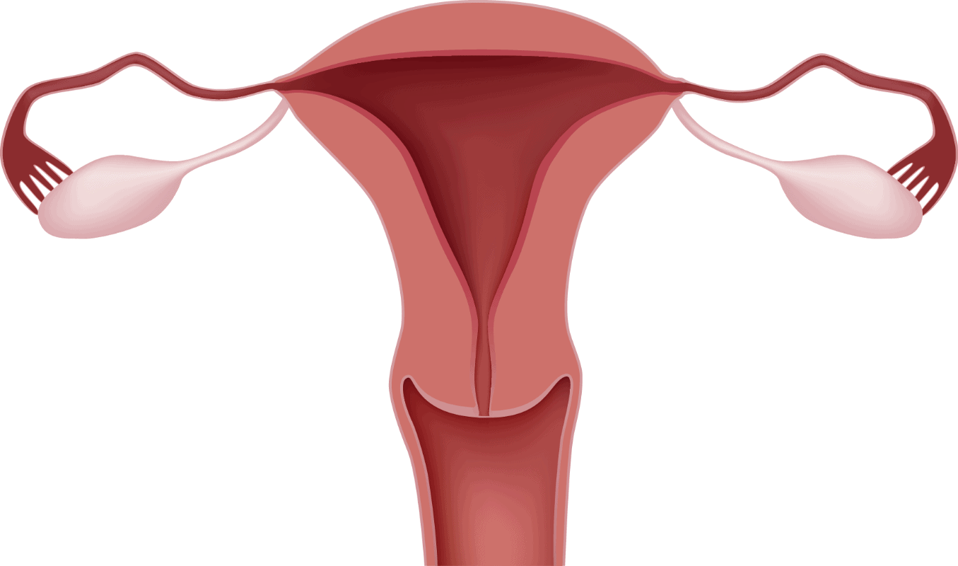factor uterino